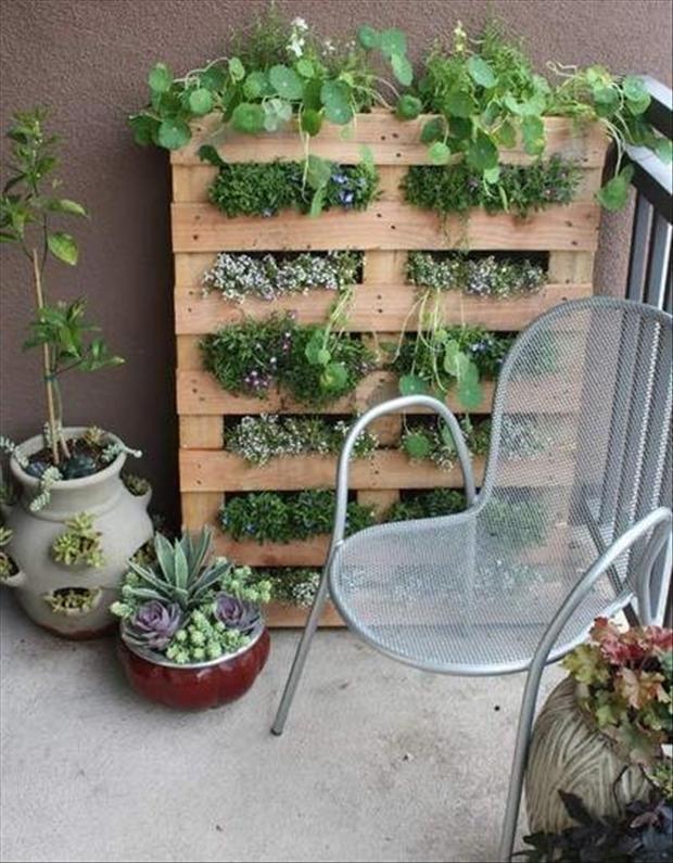 mur vegetal  en palette
