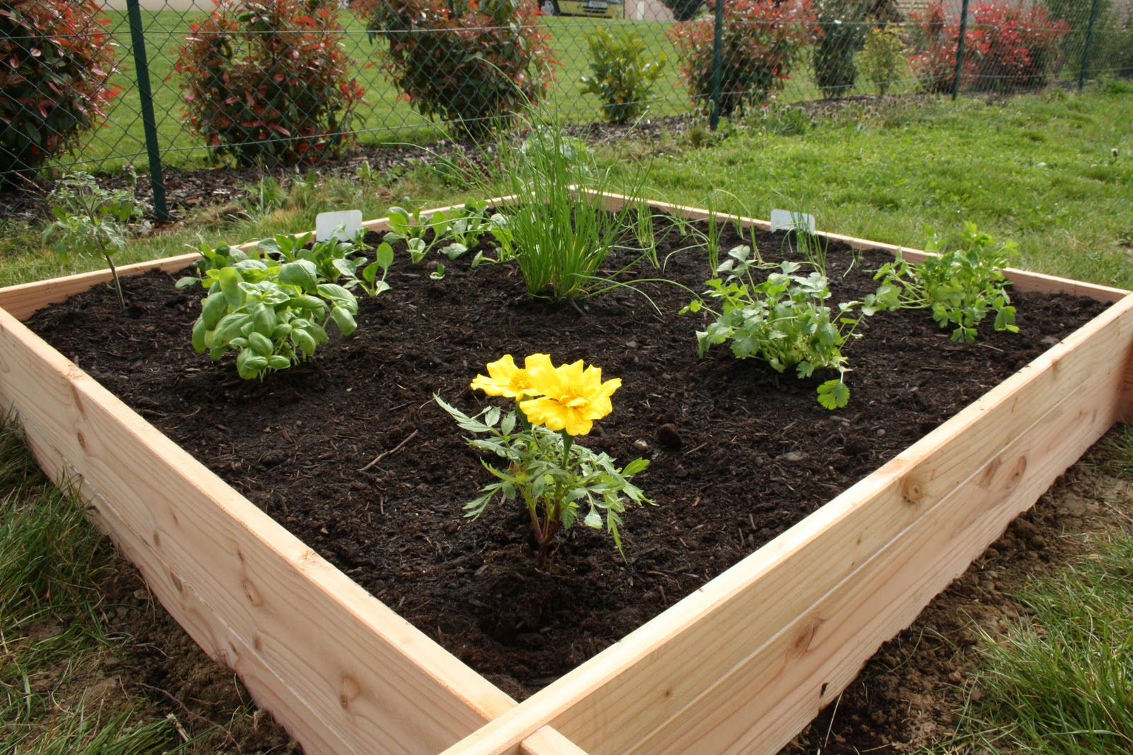 Faire un potager bricobistro for Carre jardin