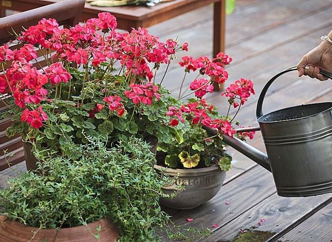 embellissez votre balcon avec des fleurs bricobistro. Black Bedroom Furniture Sets. Home Design Ideas