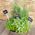 planter plante aromatique (4)