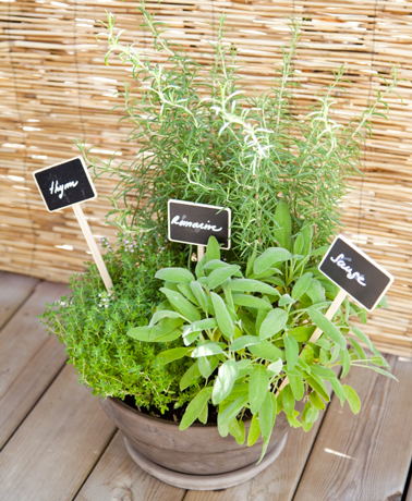 comment planter des plantes aromatiques sur un balcon. Black Bedroom Furniture Sets. Home Design Ideas