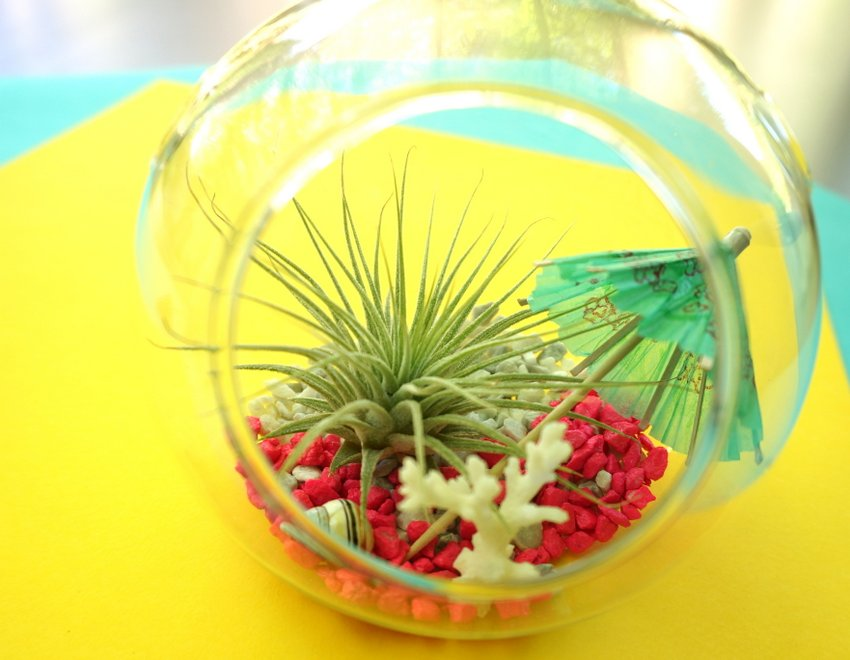 DIY terrarium tropical1