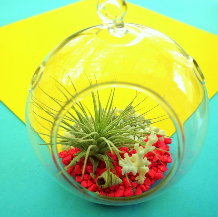 DIY terrarium tropical8