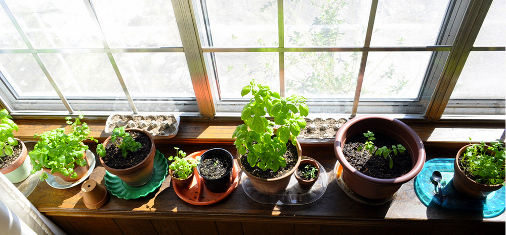 Foods You Can Grow Indoors This Winter Coupon Connections