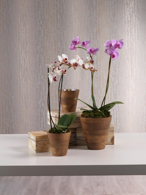 pot orchidée2